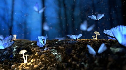 Blue Butterflies on Log